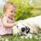 Bebés y mascotas – Beneficios y desventajas